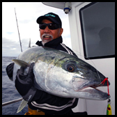 Yellowtail Kingfish / Amberjack / Samson Fish